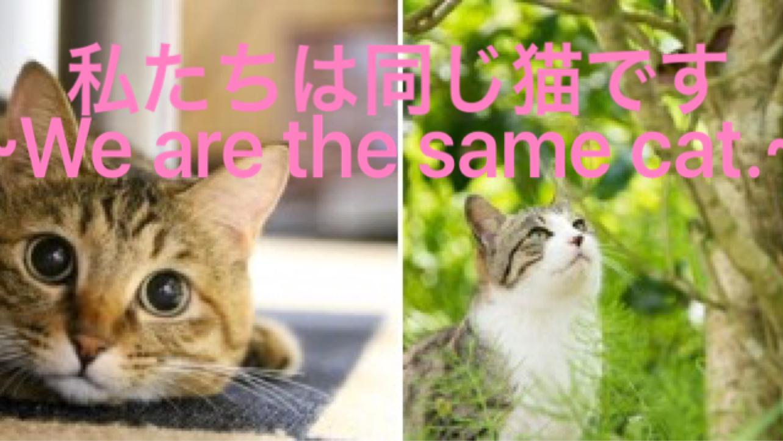 省 愛護 環境 室 動物 管理