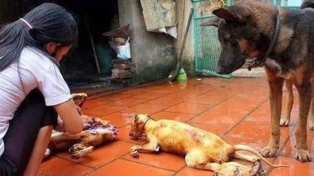 Dog Set On Fire While Giving Birth Liveleak
