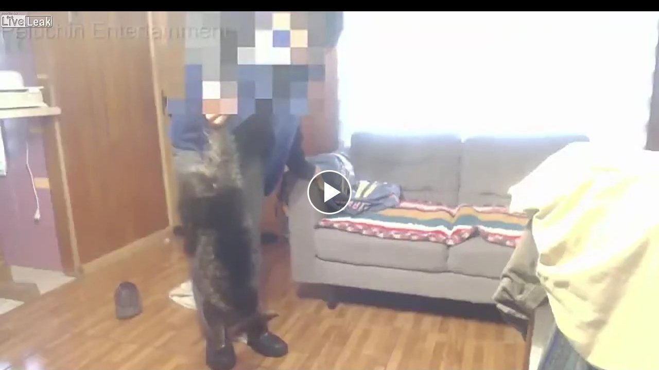 Cat death liveleak