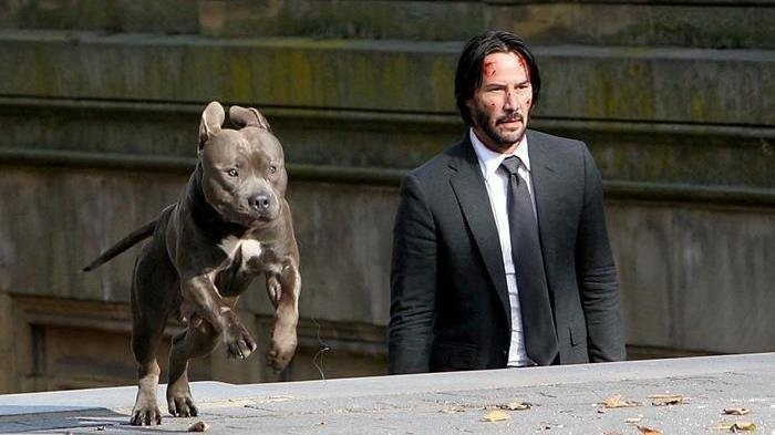 petition  u00b7 keanu reeves u0026 39  john wick pet adoption commercial
