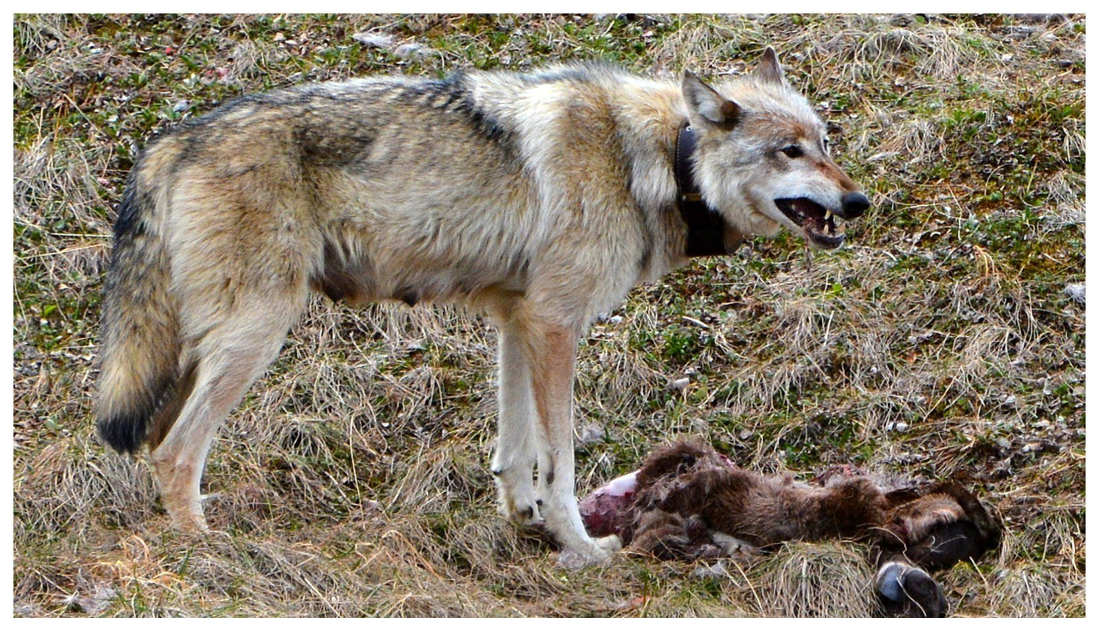 Petition oregon state wildlife commission oregon for Oregon department of fish and wildlife