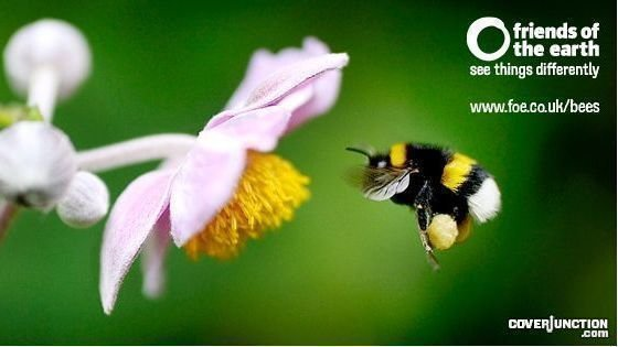 Petition · Protect our bees from toxic pesticides · Change org