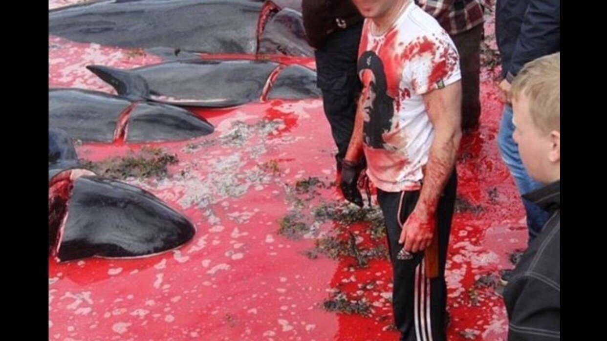 Petition · STOP THE ANNUAL SLAUGHTERING OF PILOT WHALES IN THE FAROE ISLANDS  · Change.org