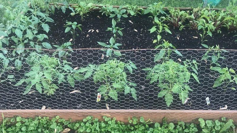 Deem Garden Centers Nurseries