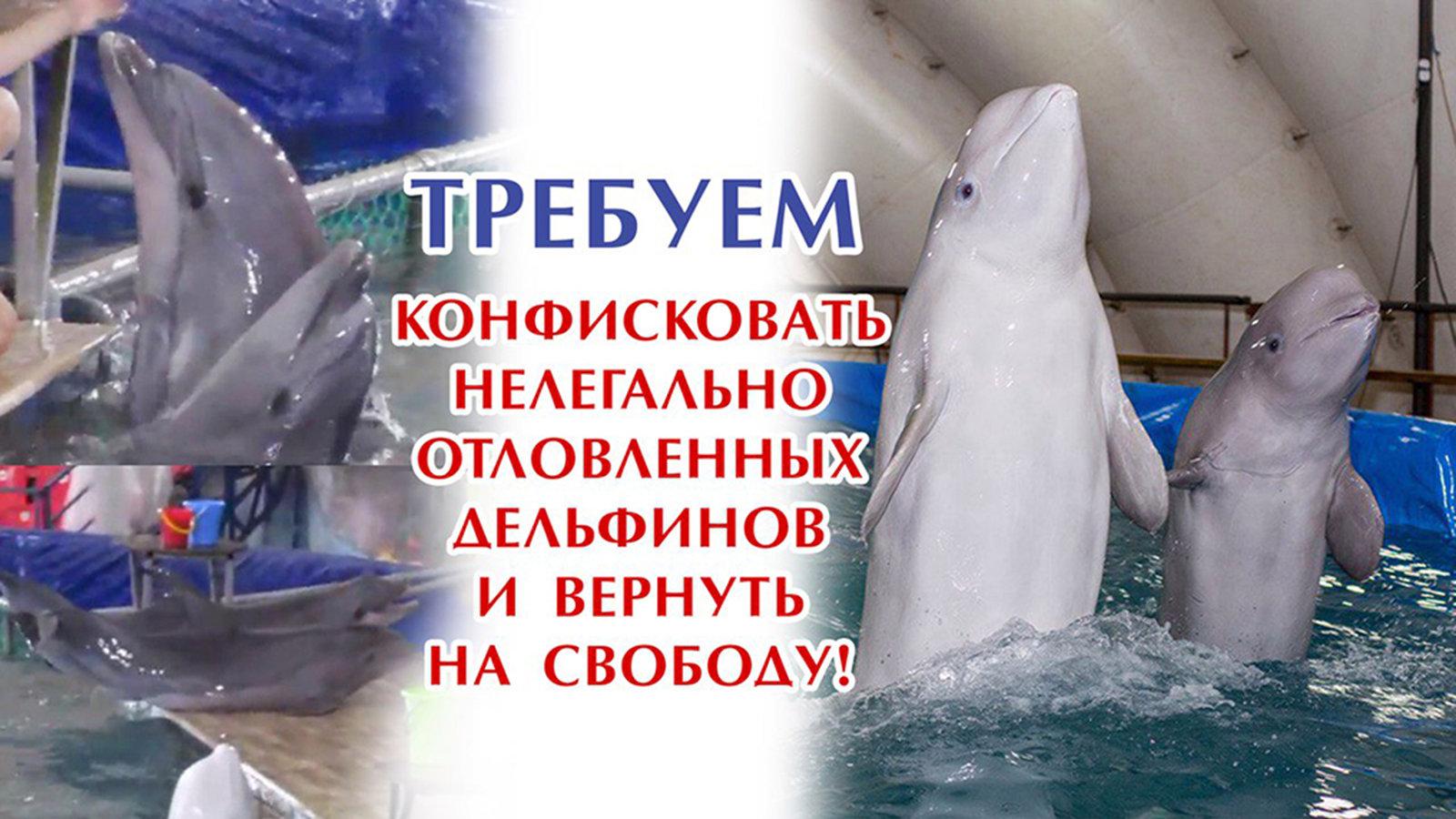 Начальнику Генеральной прокуратуры Чайка Юрию Яковлевичу: Конфисковать нелегально отловленных дельфинов и вернуть на свободу!