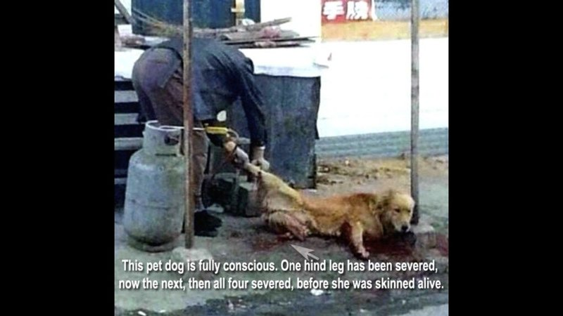 Petition · Make animal cruelty illegal in China  · Change org