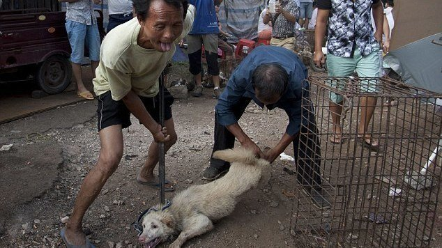 Petition · End the Yulin Dog and Cat meat festival · Change org