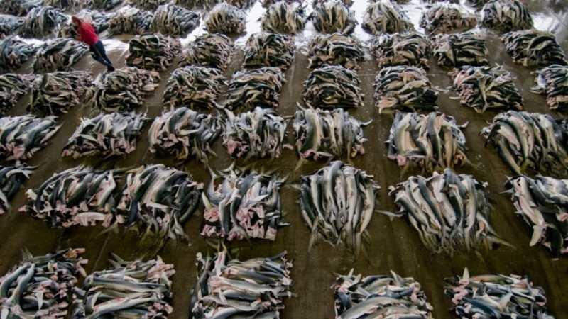Petition · Stephen Harper: Stop Overfishing in Japan ...