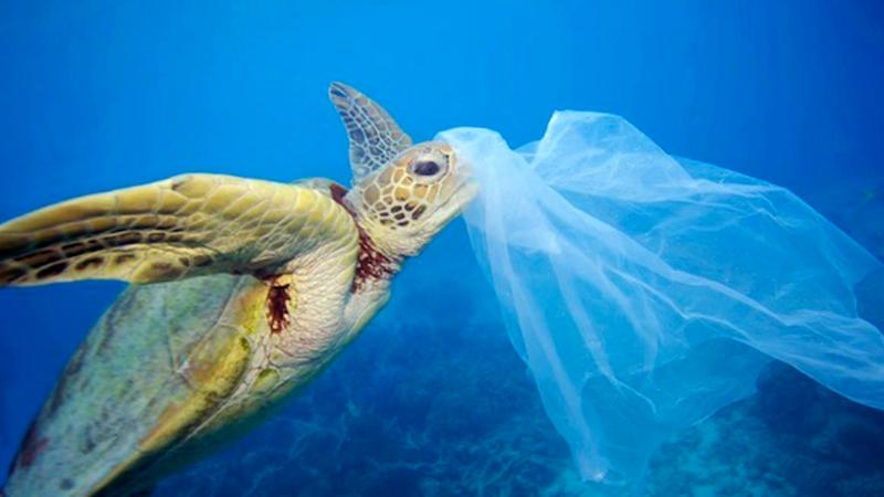 Los Las Ley · Petición Plástico Para De Eliminar Bolsas TcFJlK1