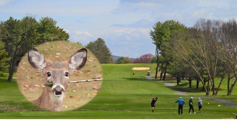 Deer shot with arrow, change.org