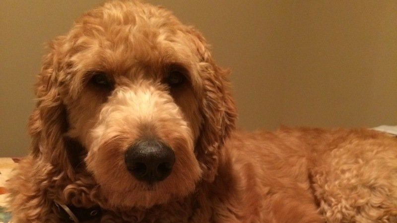 Petition Make Improvements To New Brunswicks Pet