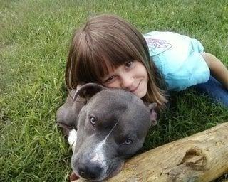 Essay banning pitbulls for