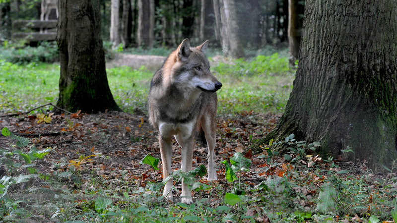 Petition Update Der Wahnsinn In Niedersachsen Changeorg