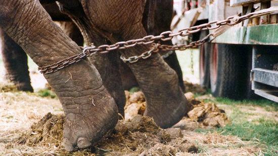 animal cruelty in factory farms statistics