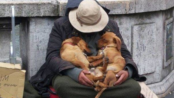 Petition  Uk Government And Parliament  Help Dogs And -9645