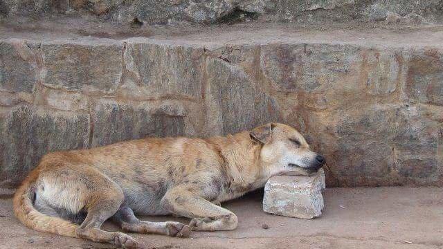 Street Dog Rescue