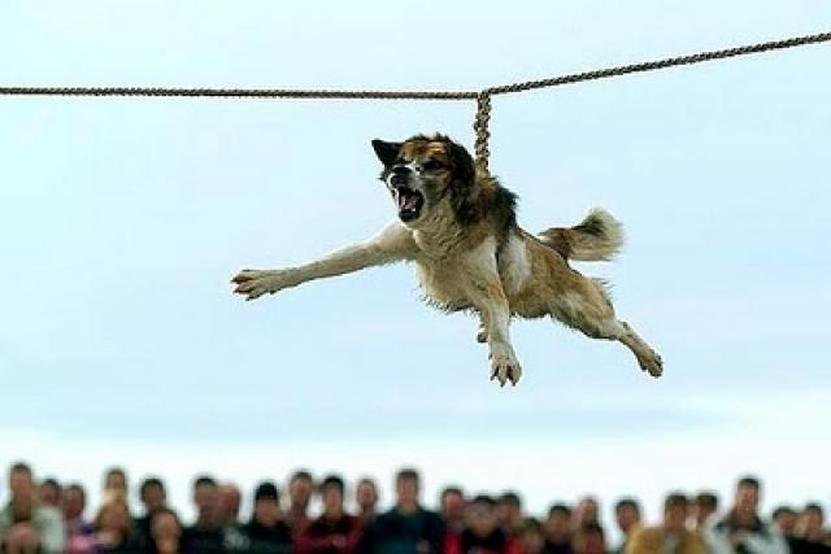 Bulgarian Dog Spinning