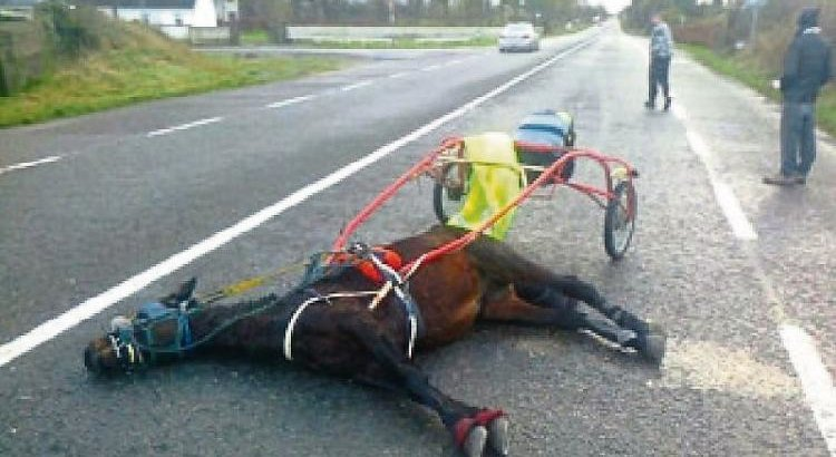 Petition · Ban Sulky Racing in Ireland · Change org