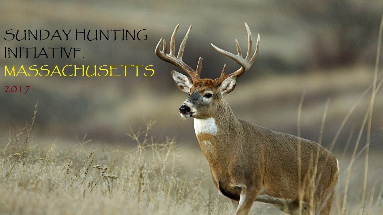 Petition 2017 massachusetts sunday hunting initiative for Ma fishing license cost