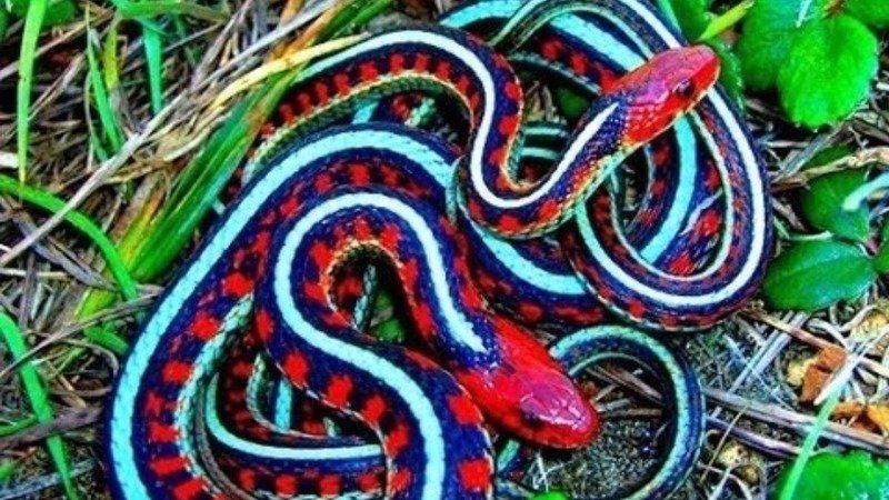 petition president whitehouse gov change the snakes name to