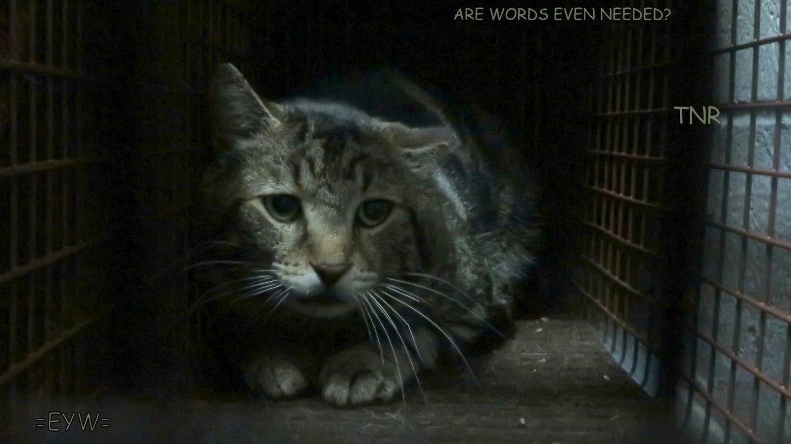 big cat rescue cage