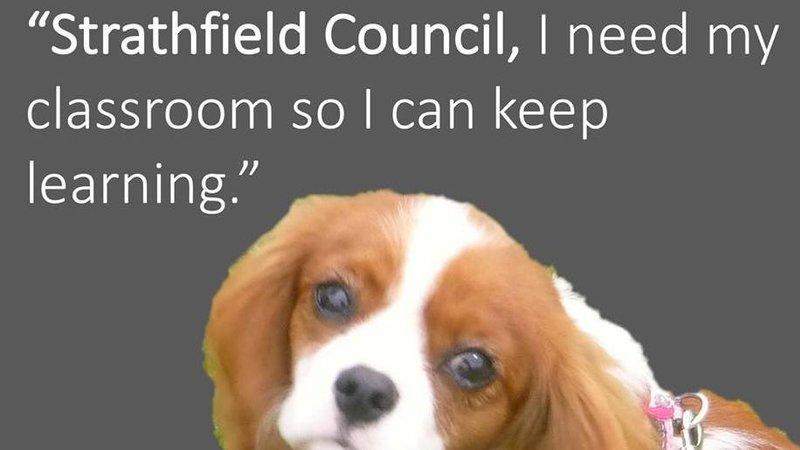Strathfield Park Dogs