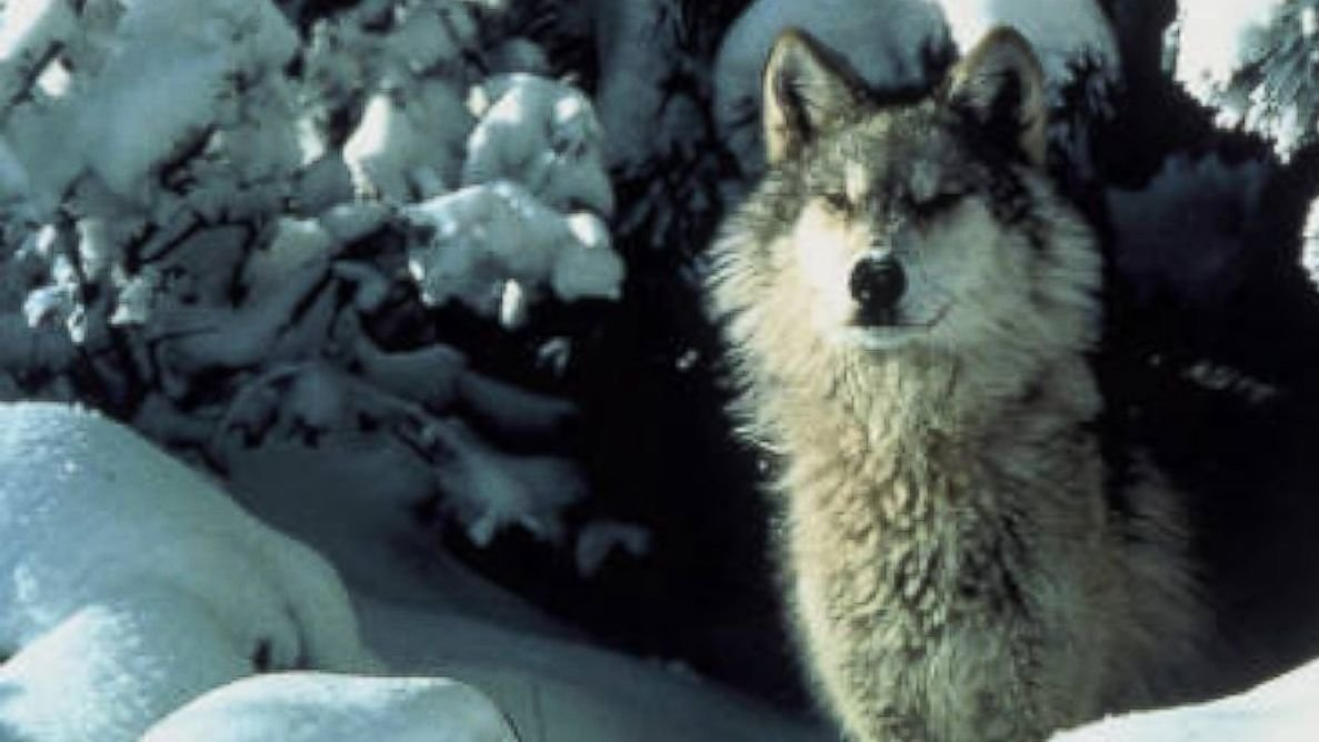 Petition u s fish and wildlife service stop washington for Us fish and wildlife