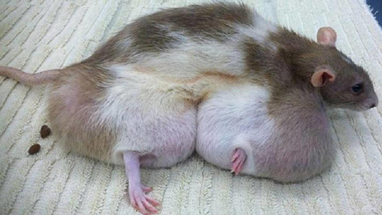 12 Genetically Engineered Animals That Changed Modern