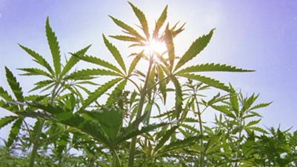 Петиция марихуана что делают за употребление марихуаны