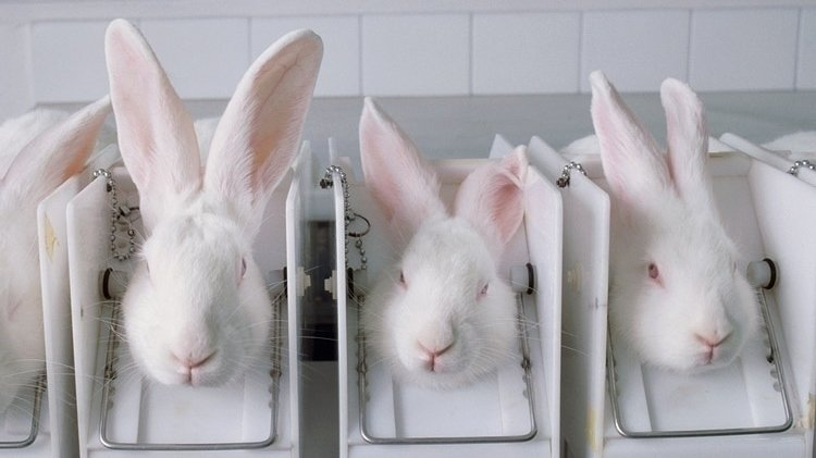 an argument against testing drugs on animals in laboratory
