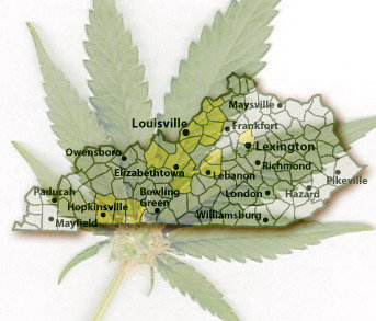 the legalization of marijuana for medical purposes A 2013 study found that medical cannabis legalization is  have legalized  cannabis for medical purposes.
