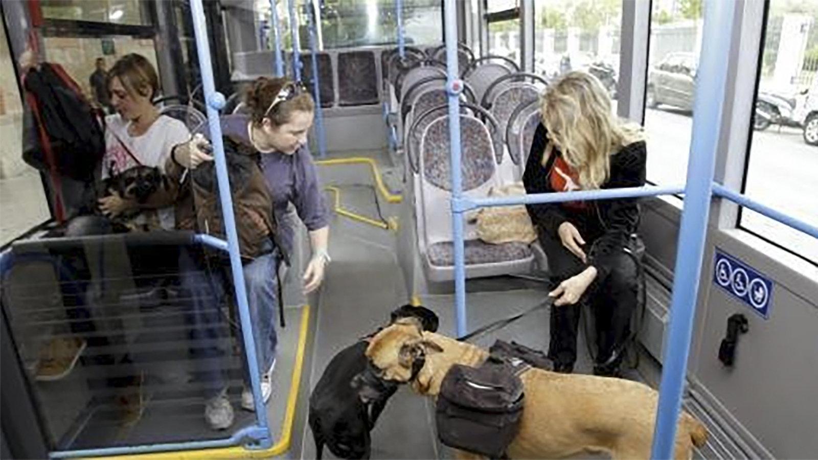 Трамвай аликанте маршруты