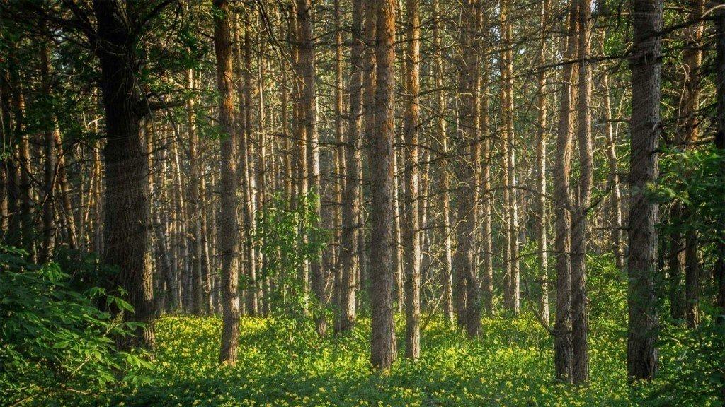 лес самара картинки кухни мдф теснением