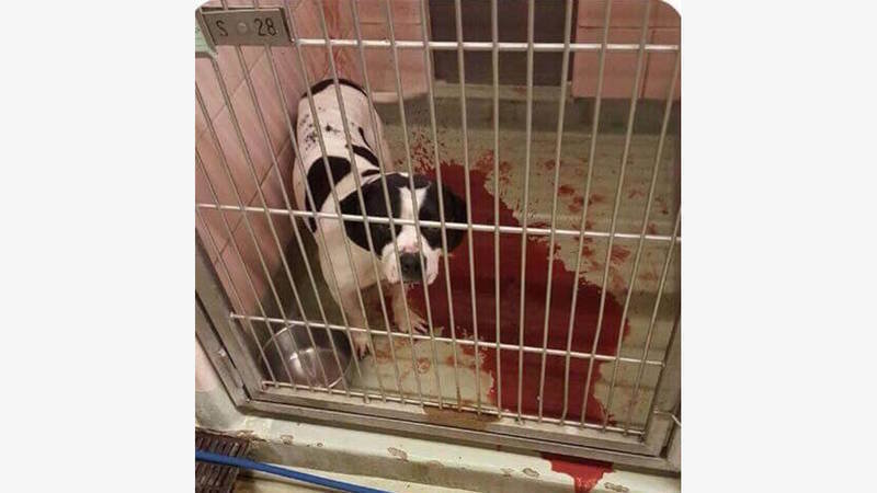 Petition Investigate Animal Welfare League In Chicago Ridge Illinois Change Org