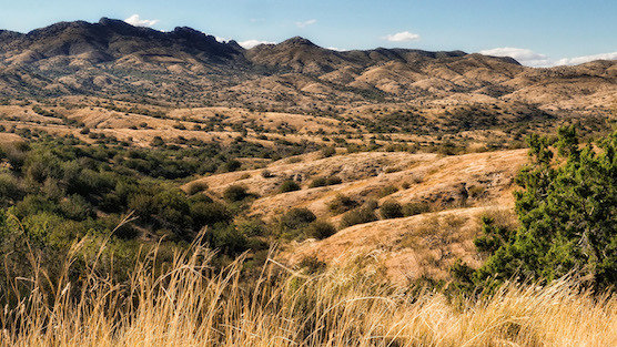 Santa Rita Mountains IBA » Arizona Important Bird Areas ...