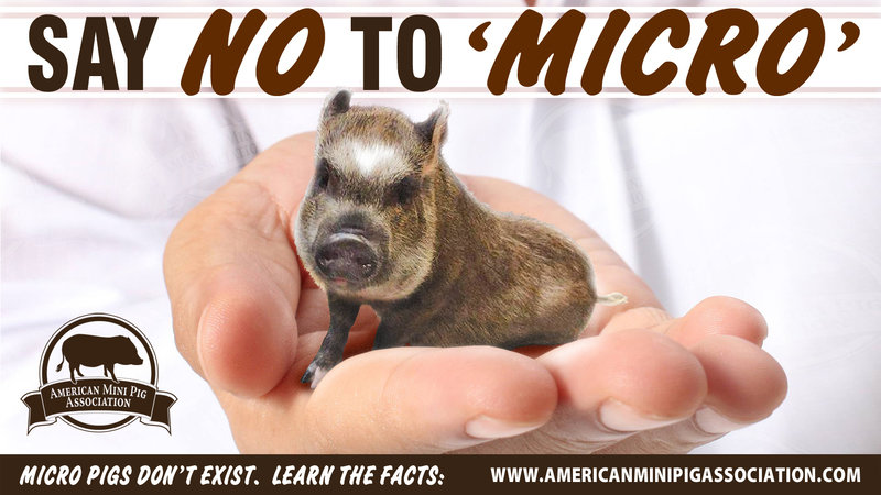 Petition Mini Pig Breeders And Owners In The Us And Canada Sign