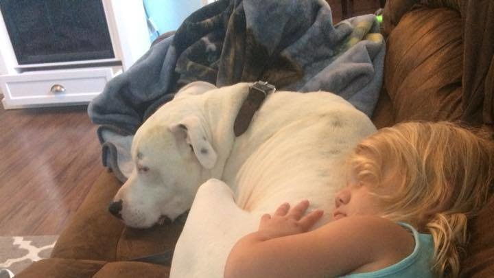 Petition · Overturn Pit Bull Ban In Ripley, Mississippi