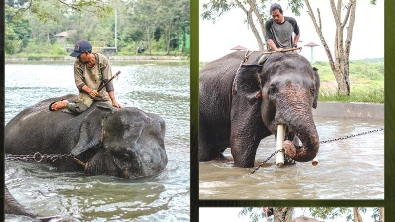 Petition Worst Elephant Training Center Pusat Pelatihan Gajah