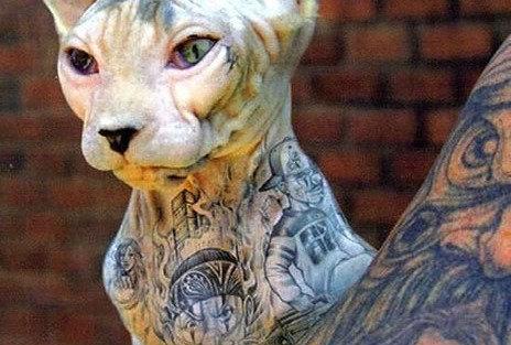 Kampanya · Hayvanlara dövme yapılması yasaklansın