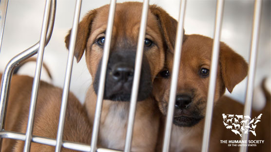 Petition 183 Michigan Strengthen Pet Store And Animal