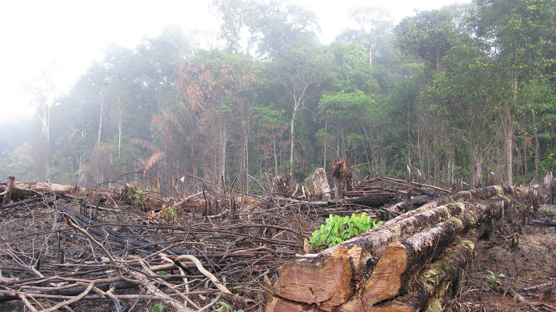 Image result for amazon forest deforestation