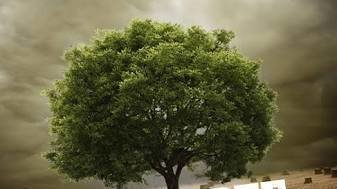 Petition · Plant & Save Trees : Save Nature · Change.org