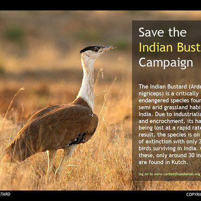 Petition · Save the Indian Bustard Campaign · Change org