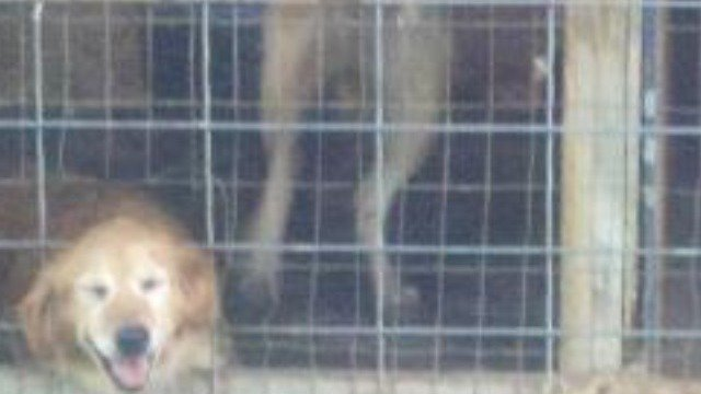 Petition · Stop cruel puppy mill breeding by the Amish · Change org