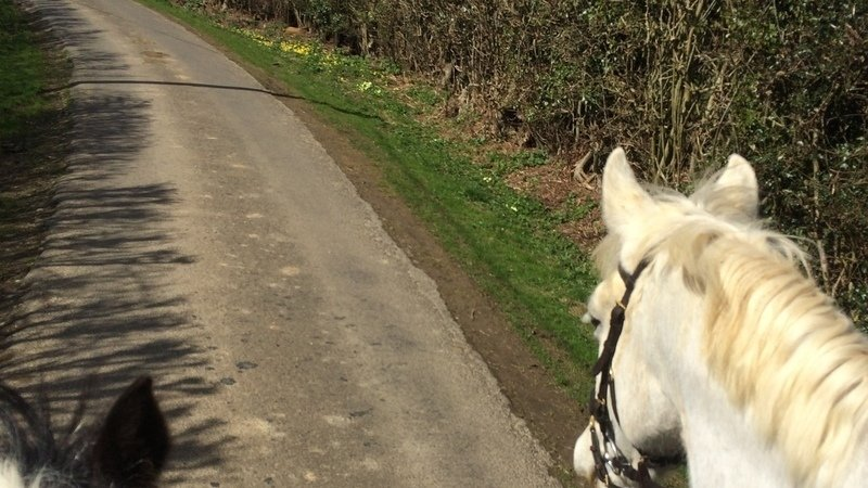 Petition launched to get more Bridlepaths included in Town Planning to help horses get off the busy roads