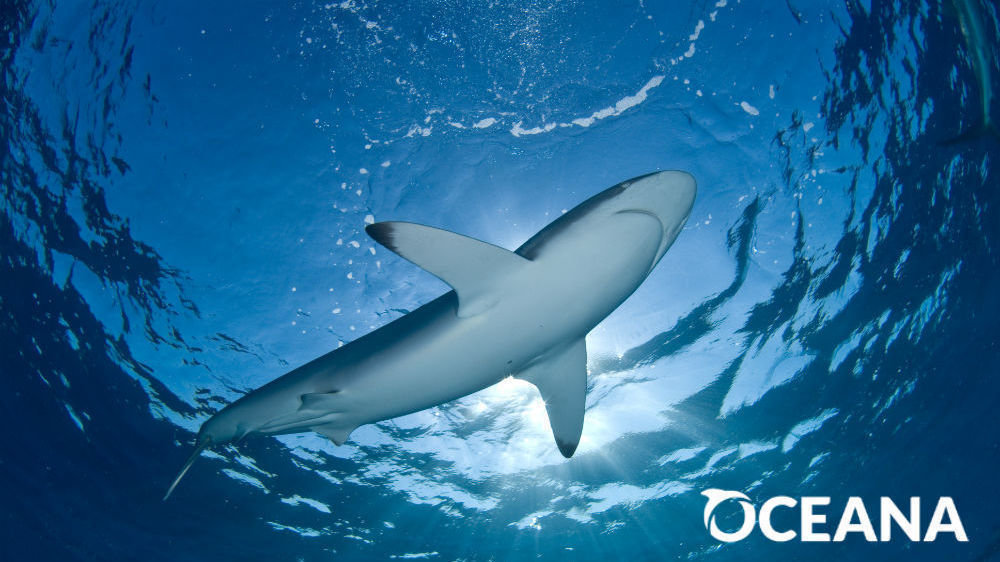 shark finning is inhumane Shark finning is not only a cruel and backwards practice, it is a waste and a travesty on nature and must stop before the great equalizer of the sea is lost forever mankind cannot continue to abuse nature or nature will strike back and with brutal fury.