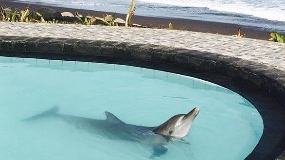 petition wake bali dolphins free four wild dolphins contained in