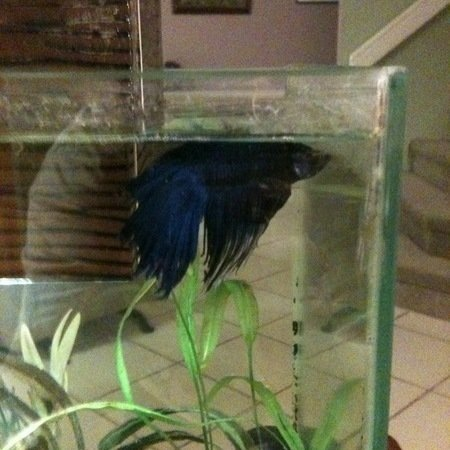 Petition ask pet stores to stop selling betta fish in for Best place to buy betta fish online