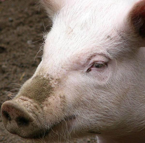 petition 183 stop farm animal cruelty 183 changeorg