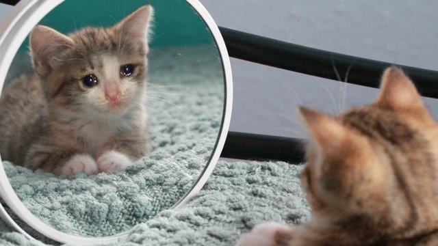 Petition Stopping Sad Cat Abuse Change Org